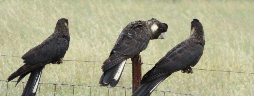 bakershill birds
